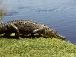 U Florida Visit 163