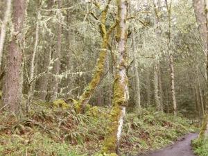 University of Oregon Trip 042