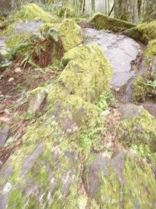 Rocks and moss.