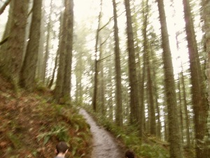And the trail keeps going up. I'm 99.9% sure it eventually leads to Rivendell or some other Elven enclave.