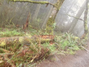 University of Oregon Trip 068
