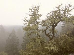 University of Oregon Trip 077