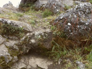 More mossy rocks. I'm obsessed, okay?