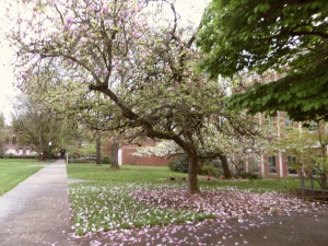 University of Oregon Trip 111